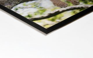 mdf mounting - genesis imaging - photographic mounting