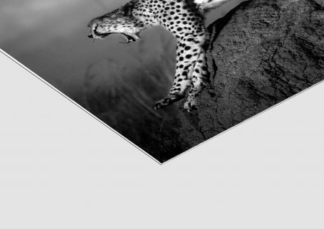 'Malaika' Cheetah (detail), Masai Mara 2014 © David Lloyd. ChromaLuxe Fine Art print on white polymer-based aluminium with matte finish.