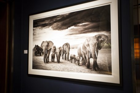 'Family' © David Yarrow Photography Installed at Christie's for the inaugural Tusk Trust lecture series, 2014. Bespoke framing and window mat by Genesis Imaging.