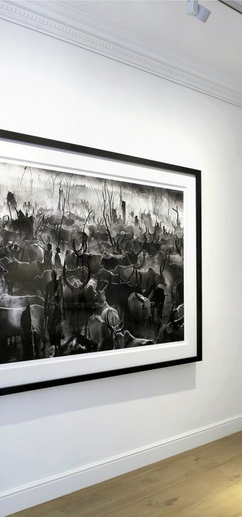 David Yarrow at Delahunty Fine Art Gallery, Mayfair, London.