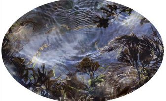 Tide Pool 39, unique C-type print © Susan Derges