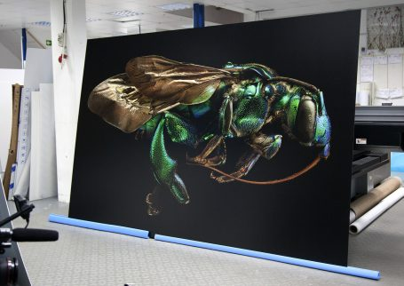 Orchid Cuckoo Bee, from the series 'Microsculpture' © Levon Biss, produced as a Direct to Media UV print on Dibond by Genesis Imaging.