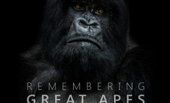 Book cover for Remembering Great Apes