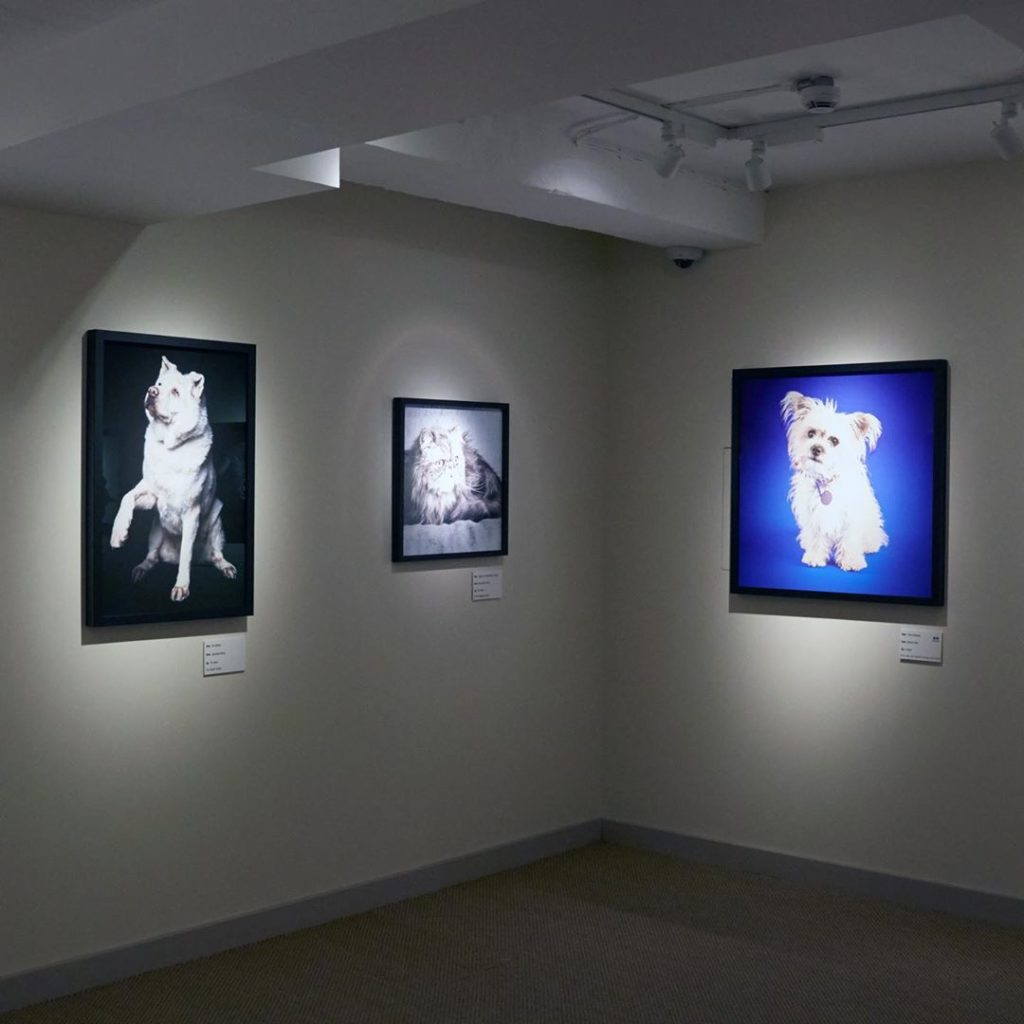 Ava's exhibition at Battersea Dogs & Cats Home