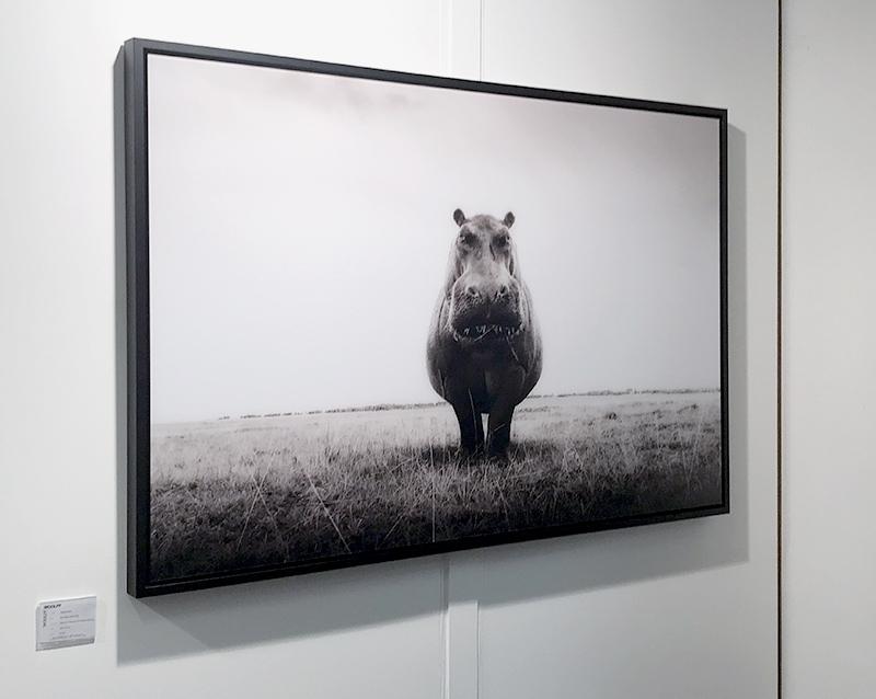 Graeam Purdy, London Art Fair 2020